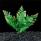 растения для декора аквариумов