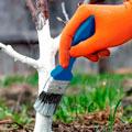 средства для борьбы с болезнями растений