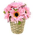 декоративные садовые композиции из цветов