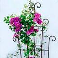 опоры для садовых цветов
