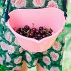 Ёмкости для сбора ягод