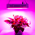 Оборудование для выращивания растений