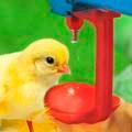 кормушки и поилки для птицы