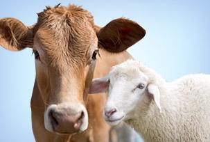 Товары для сельскохозяйственных животных