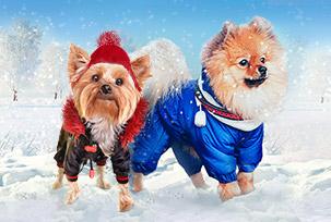 Зимние товары для животных