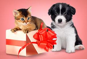 Подарочные наборы для животных