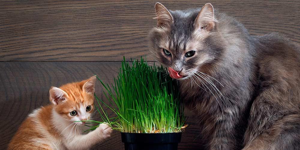 котики едят травку