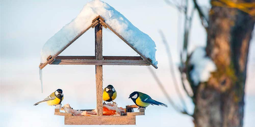 Птички клюют еду из кормушки
