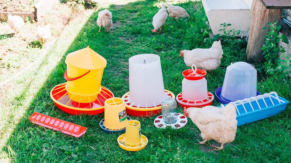 Кормушки и поилки необходимые для домашней птицы