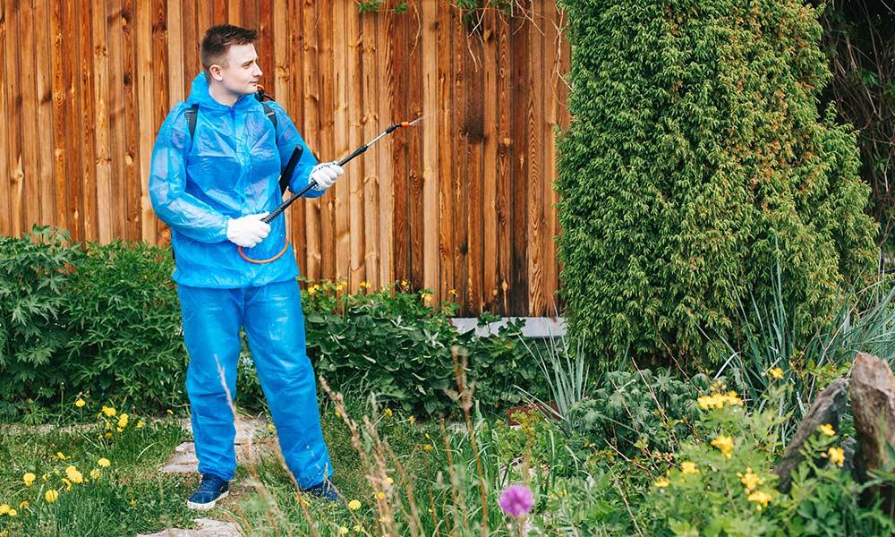 Человек опрыскивает грядку от сорняков