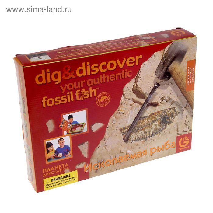 """Набор геолога """"Ископаемая рыба"""", коробка с окном ED209KR"""