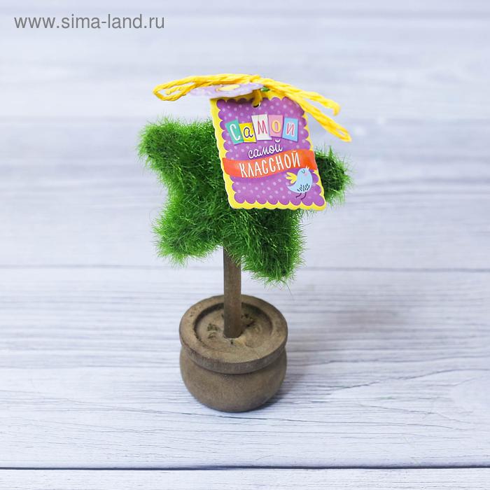 """Дерево в горшке """"Самой классной"""", 11,2 х 7,2 см"""