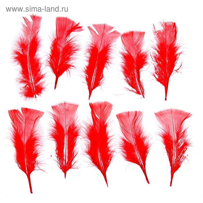 Набор перьев для декора 10 шт, размер 1 шт 16*4 цвет красный