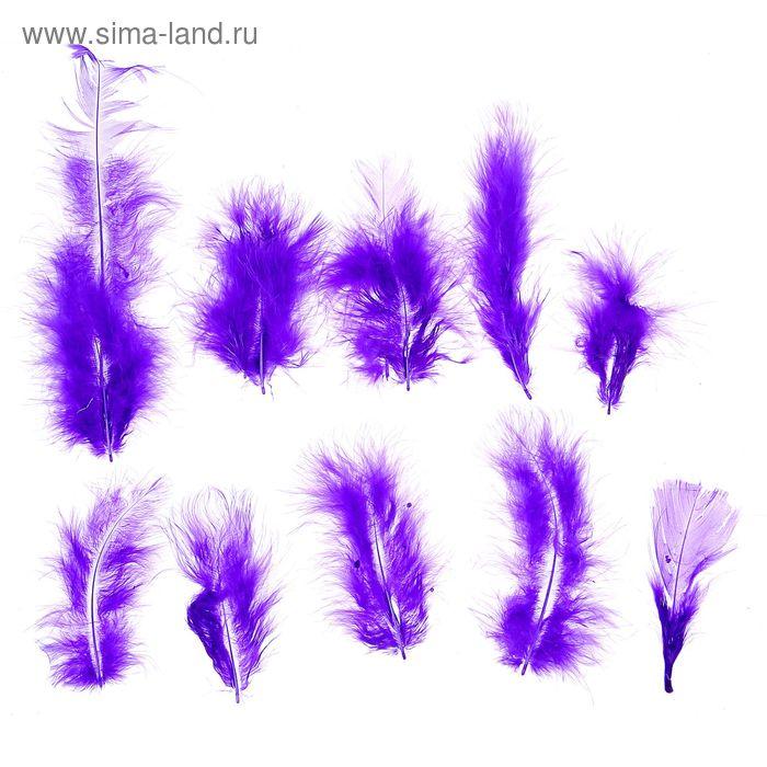 Набор перьев для декора 10 шт, размер 1 шт 10*2 цвет фиолетовый