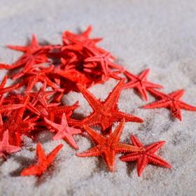 Набор натуральных морских звезд 1,5-2 см, 40 шт