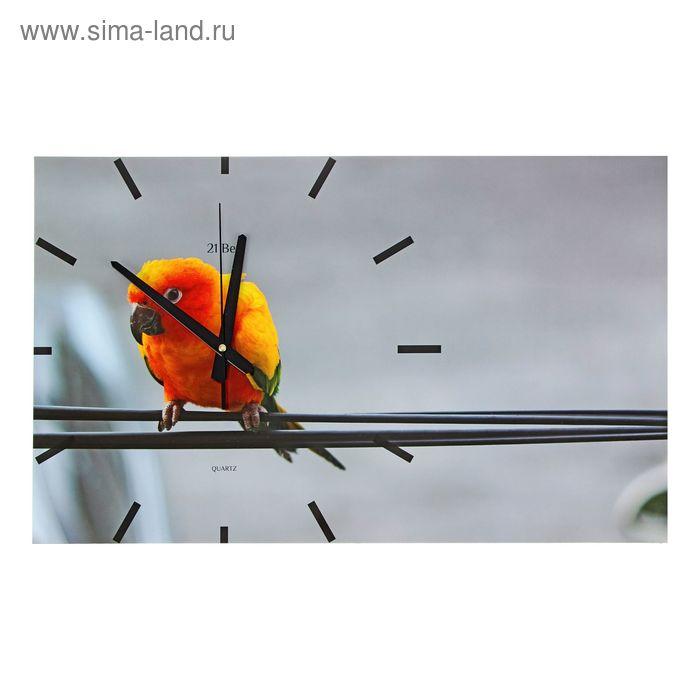 """Часы настенные прямоугольные """"Попугай"""", 61х37 см"""