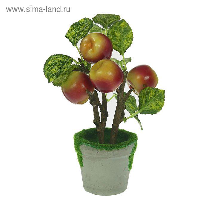 """Бонсай """"Дерево с яблоками"""" красно-зелёные"""