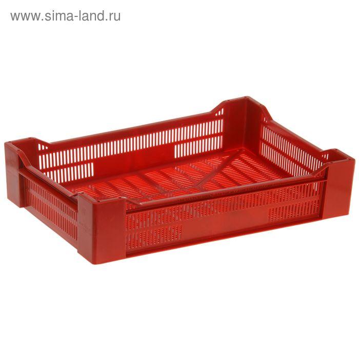 """Ящик п/э 60х40х13,5 см """"Ягодный"""", цвет красный"""