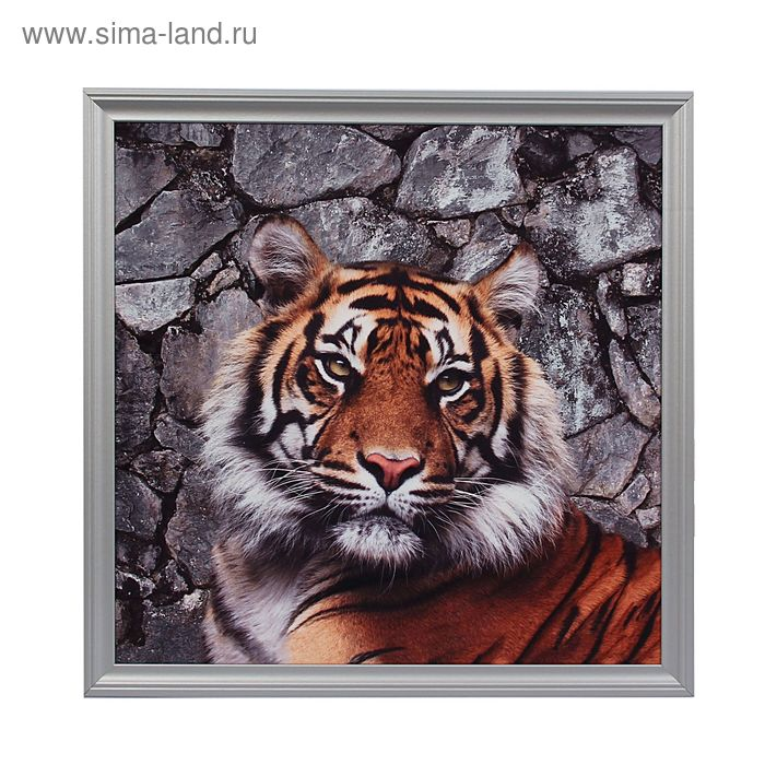 "Картина ""Тигр на фоне камней"""