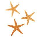 Набор из 3 морских звезд, размер каждой 6-10 см
