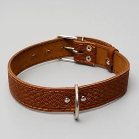 Ошейник кожаный однослойный, 64 х 3,5 см, микс