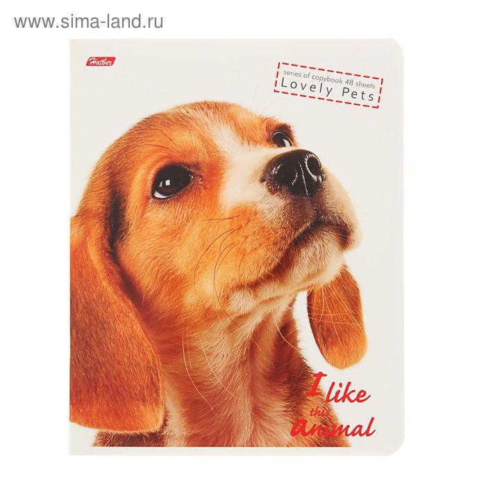 Тетрадь 48 листов клетка I Like Animals, картонная обложка, МИКС
