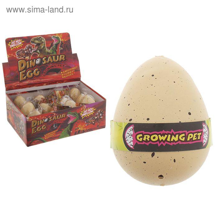 """Растущие животные натуральное яйцо макси """"Курочки"""""""