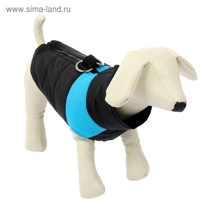 Куртка на синтепоне с креплениями для поводка, размер S (ОГ 39 см, ДС 26,5 см), черная с голубым