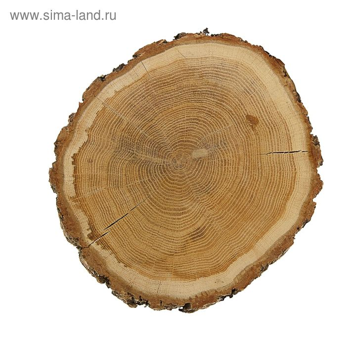 Спил дубовый шлифованный, СДШ 1, сушёный (d 20-25см, h 3см), шт