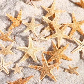 Набор натуральных морских звезд 2,2 - 3,5 см, 20 шт