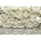 """Фотообои Komar 8-314 """"Белые розы"""", 3,68х2,54 м"""