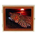 Леопард в ночи