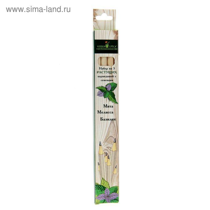 """Растущие карандаши Green Stick """"Пряные травы"""", набор 3 шт., чёрные"""