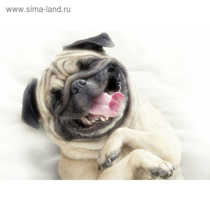 Вставка керамическая Pets PS2M053D Dog 1, белая, 250х350 мм