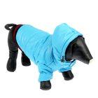 Куртка супертеплая на синтепоне с отстегивающимся капюшоном, размер S (ДС 27 см, Ог 49 см), голубая