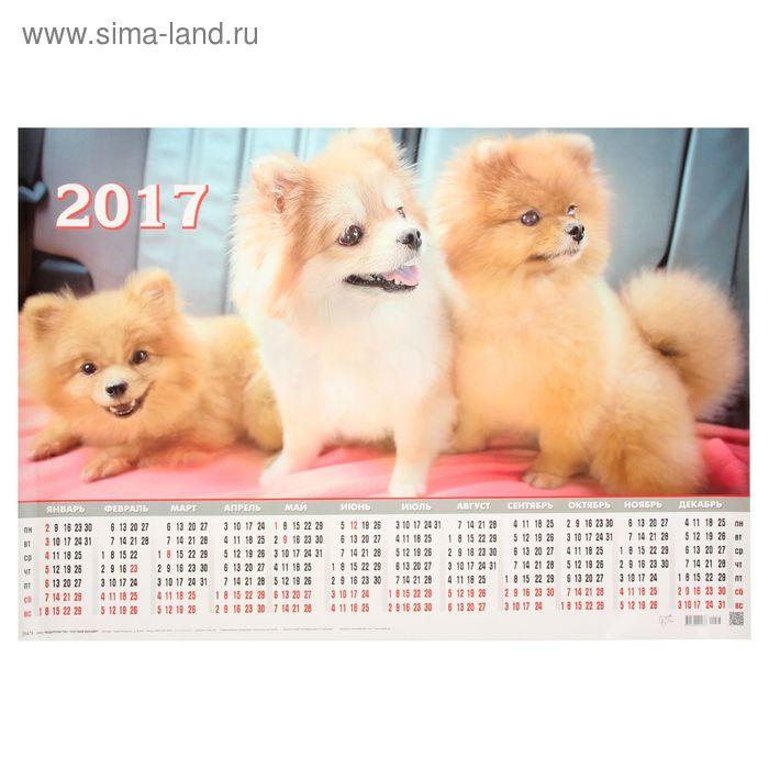 """Календарь 2017 Лист А2 """"Собаки-шпицы"""""""