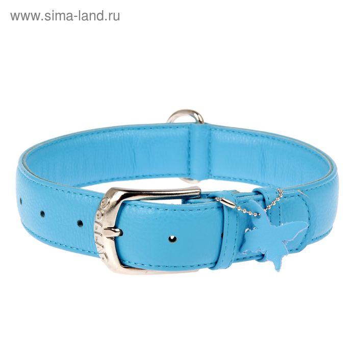 Ошейник неукрашенный CoLLaR Glomour, 46-60 х 3,5 см, синий