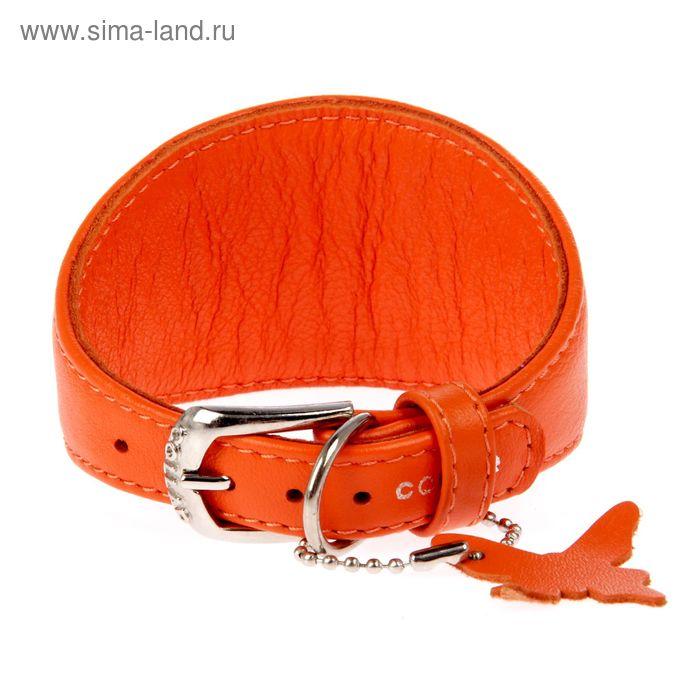 Ошейник неукрашенный CoLLaR Glomour для борзых собак, 23-27 х 1,5 см, оранжевый