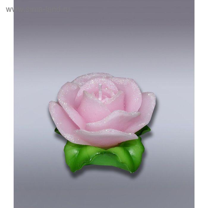 Свеча роза розовая на листьях