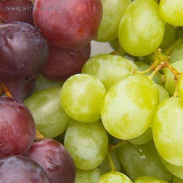 Декор 20х20см Толедо Виноград цветной 14-00-55-140-7
