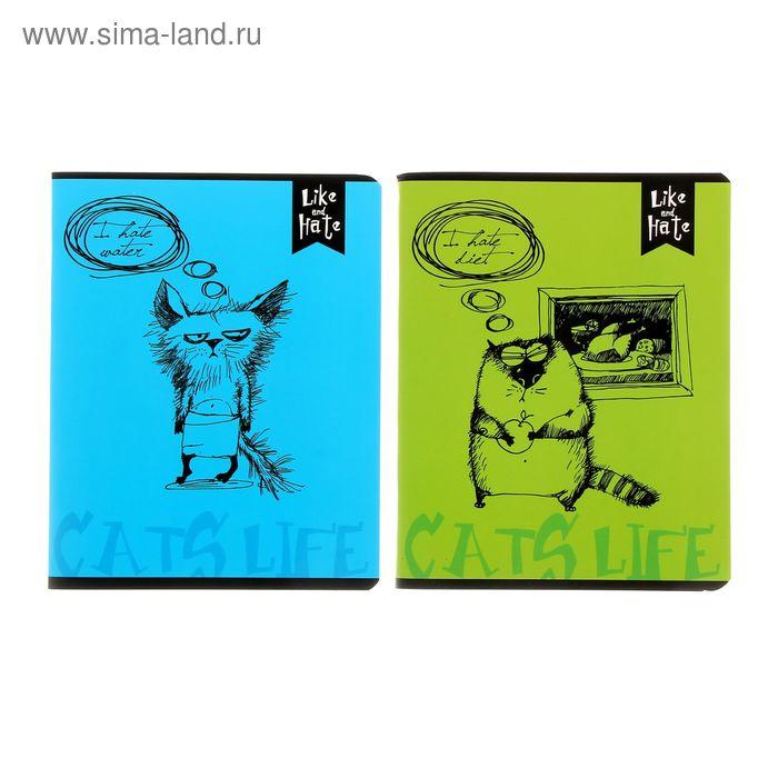 """Тетрадь 96 листов клетка """"Коты"""", картонная обложка, двойная обложка, МИКС"""