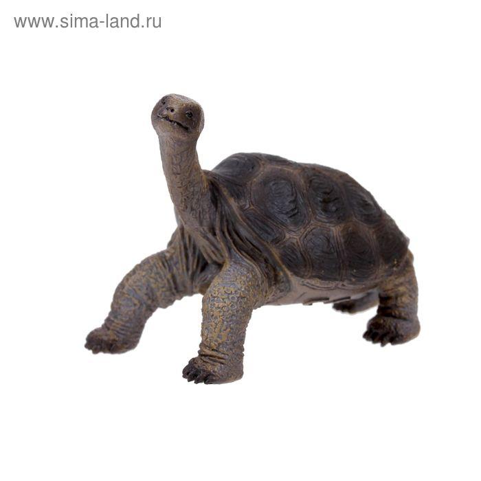 """Фигурка """"Абингдонская слоновая черепаха"""" 88619b"""
