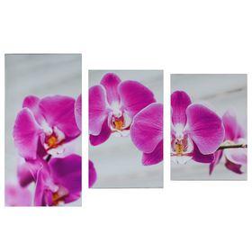 """Модульная картина на подрамнике """"Розовая орхидея"""", 99×65 см"""