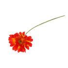 """Цветы искусственные """"Гербера Искра"""" 9*50 см, оранжевая"""
