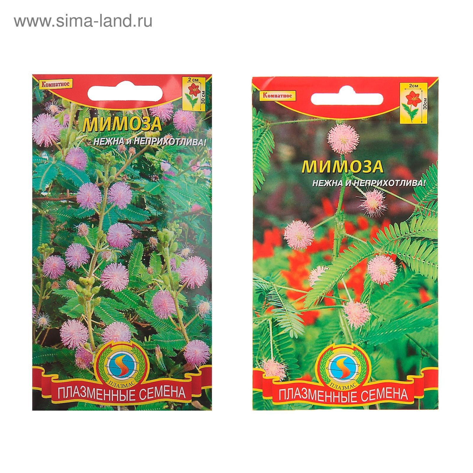 Семена комнатных и экзотических растений купить почтой в 73
