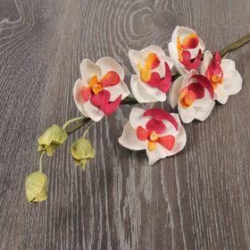 Декоративный цветок 'Пёстрая орхидея' Ош