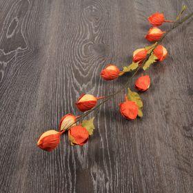 Декоративный цветок 'Физалис' Ош