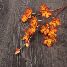 Декоративный цветок 'Оранжевая орхидея камбрия' Ош