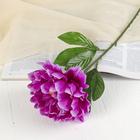 """Цветок искусственный """"Бархатный пион"""" пурпурный"""