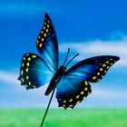 """Штекер для комнатных растений """"Бабочка"""" 7*8 см, длина 25см"""